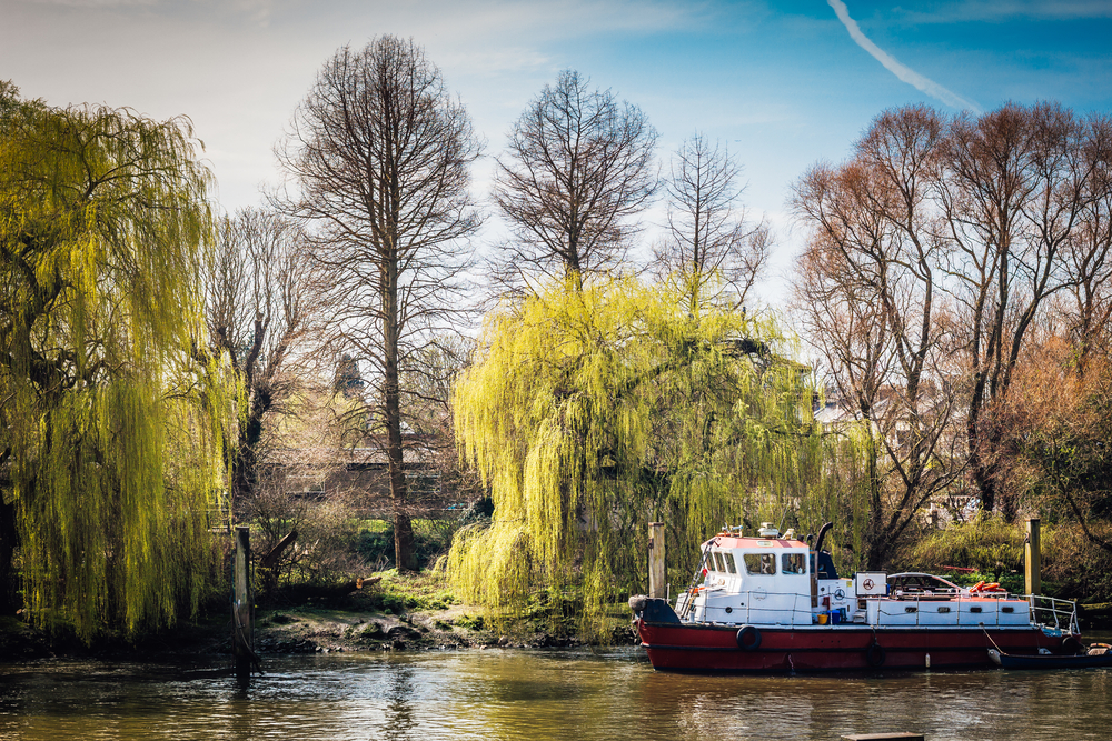 riverboat on the Thames - Richmond london