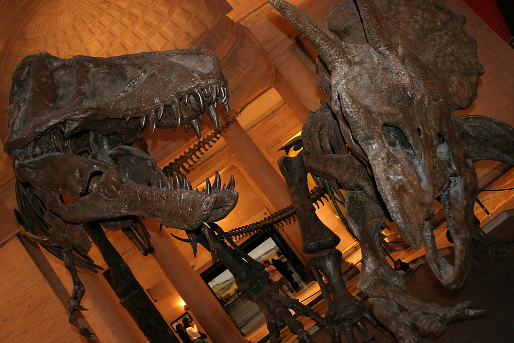 dinosaurs at Natural History Museum