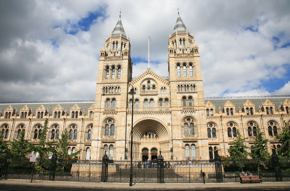 Dinosaurs, fossils and so much more: discover the Natural History Museum
