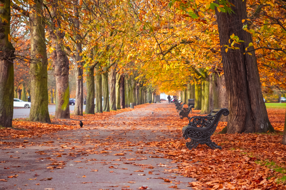 Ultimate Guide to Visiting London This Autumn